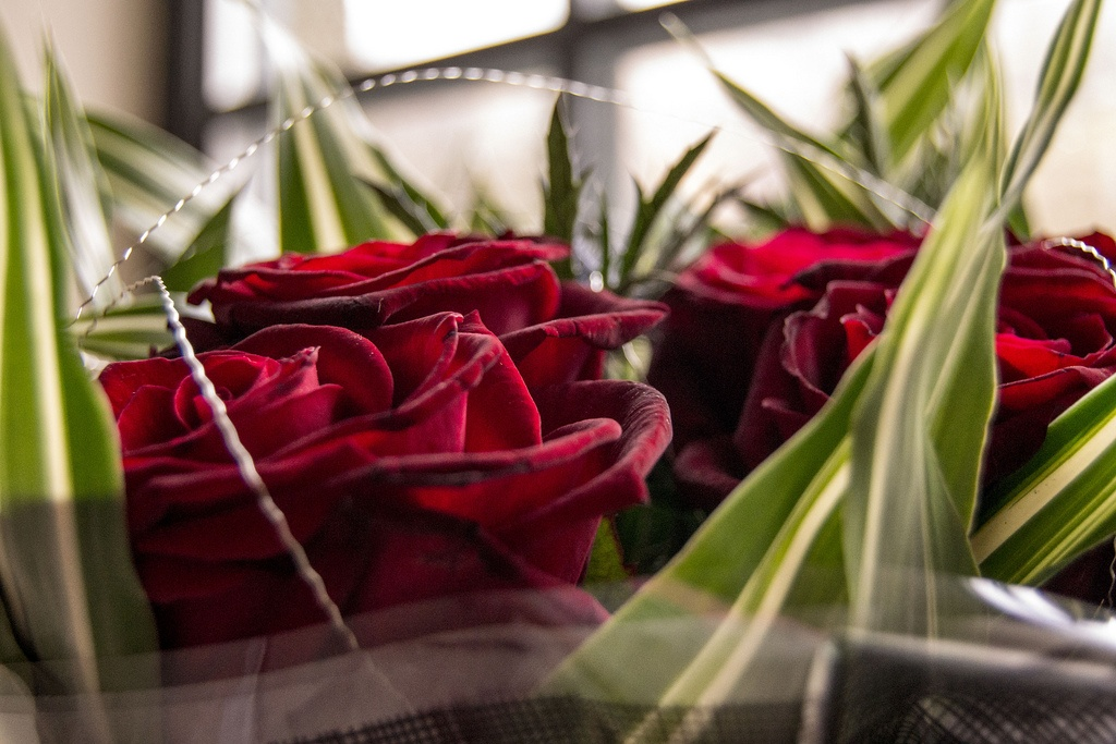 Valentine's Day prices & opening hours